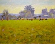Cattle in Maytown