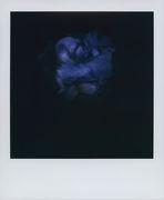 Un iris oscuro