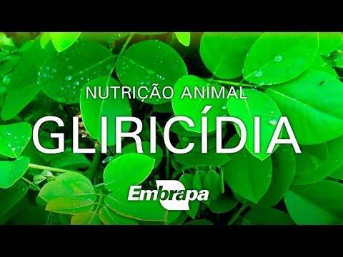 Gliricídia é um ótimo alimento para os animais