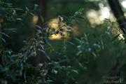 Φως... (3)