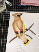 Snow Birds - Cedar Waxwing
