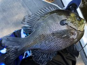 Gills Shallow On Another River Today........5/17/2020