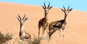 dubai-desert-conservation-reserve