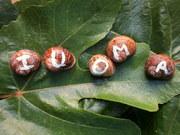 IUOMA Snails