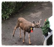 Hey don't eat my wreath!