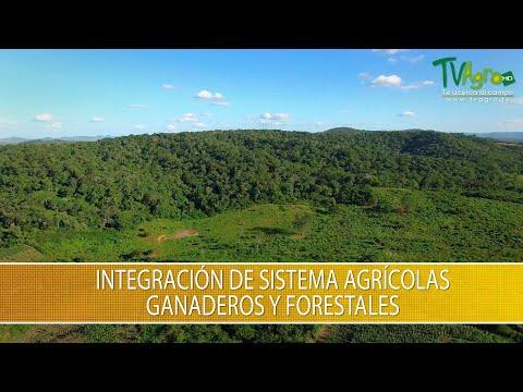 Integracion de Sistemas Agricolas, Ganaderos y Forestales - TvAgro por Juan Gonzalo Angel Restrepo
