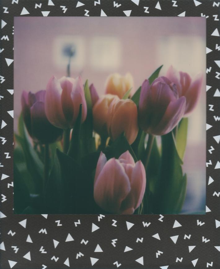 Tulipani #15