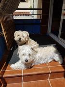 Chiko y Milu