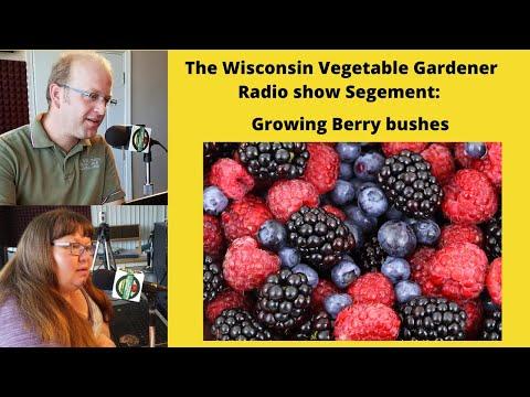Segment 2 of S4E11 Growing berry bushes - The Wisconsin Vegetable Gardener radio show