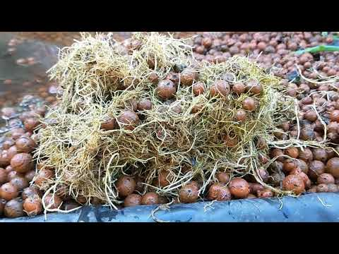 Redesigning the aquaponics grow beds