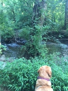2018 0819 Mickey Checking out Creek 2