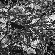 Οι ομορφιές της φύσης (4)....
