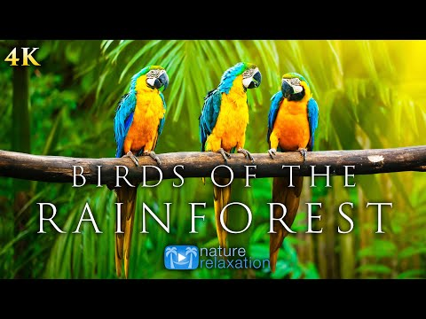 (4K) Breathtaking Colorful Birds of the Rainforest - 1HR Wildlife Nature Film + Jungle Sounds in UHD