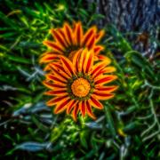 Οι ομορφιές της φύσης (5)....