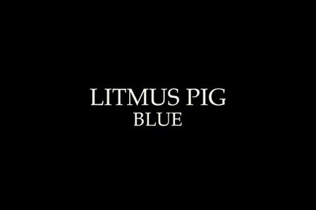 Litmus Pig (Blue)