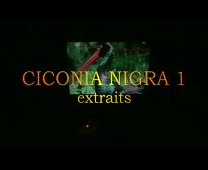 ciconia nigra extraits