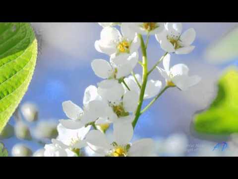 OMAR AKRAM - Angel of Hope