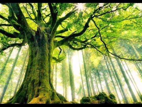 Mensagem de amizade: A Árvore de Amigos