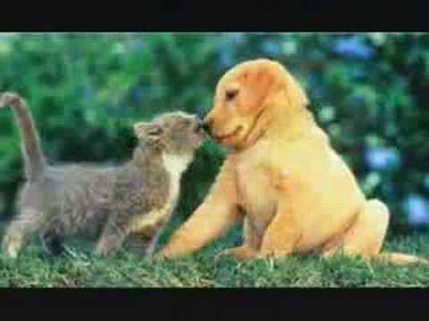 "Cute Animals, ""Why Can't We Be Friends"""