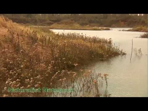 Flow along with the Red River - New Age music my Ambient Singer Marcome