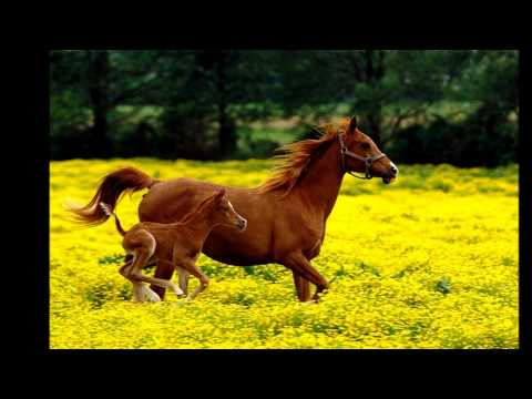 "I Want To Be Free From Fear Like ""The Wild Horses"""
