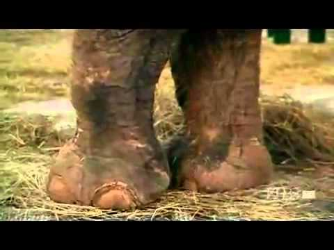 Elephants reunited after 20 years. [VIDEO].flv