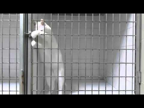 Houdini' Cat Escapes His Cage at Veterinary Clinic in Marseille