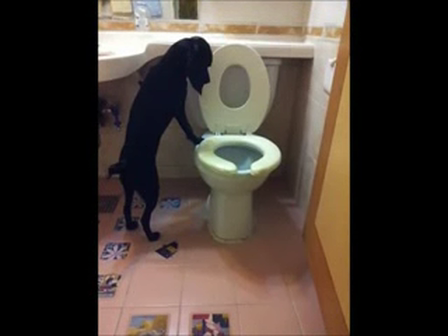 Pooch can use the toilet
