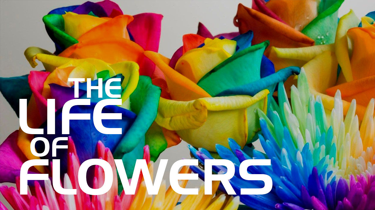 The Life of flowers (Жизнь цветов)