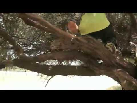Parkour/Free-Running - TreeFlow [Andrey Pfening]
