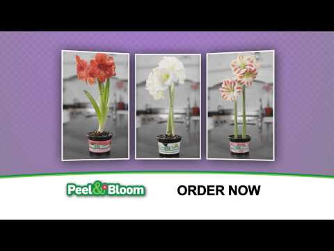The Official Peel & Bloom Commercial | As Seen On TV