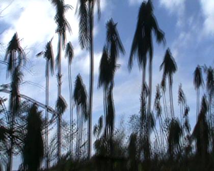 Dropping off Food Aid for Uma Village Rabi Island devasated Cyclone Tomas