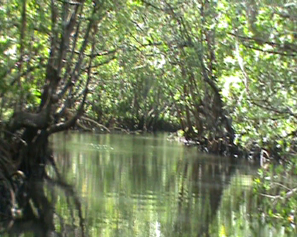 Entering Creek towards Nakoro settlement Buakonikai Rabi