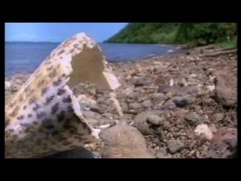 Fiji One Biodiesel Close Up show - Koro Island, Fiji Part 1
