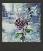 Una rosa è sempre una rosa...