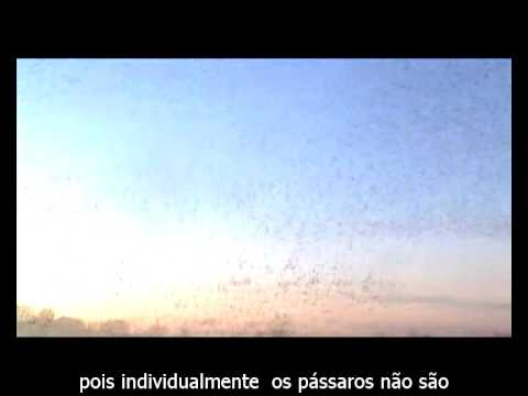Macrowikinomics Murmuration - legendado