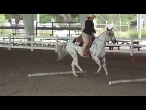 Appaloosa Horse Show Event ( Part-11 )