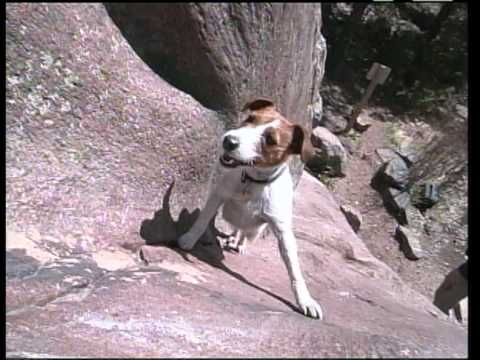 Amazing Rock Climbing Dog