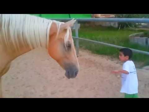 ילד מיוחד, וסוס מיוחד. Young horse creates a bond with a 4 years old child with a Williams syndrome