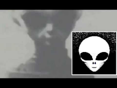 Zeta Report - Skinny Bob