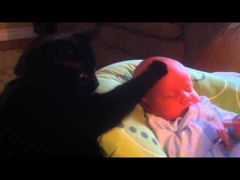 Gatto fa addormentare un bambino che piange!