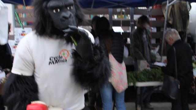 Biking to work is so easy a gorilla can do it!