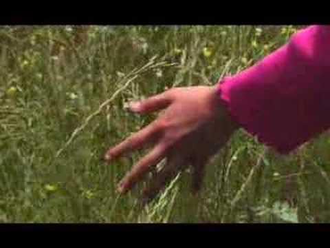 "Priscilla Ahn's ""A Dream"" Music Video"