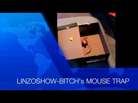 SNAKE EATING MOUSE