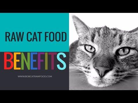 Raw Cat Food BENEFITS