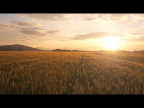 "90 seconds to discover a new ""Hope in healthy soil"""