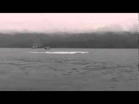 Breaching Whale 2010