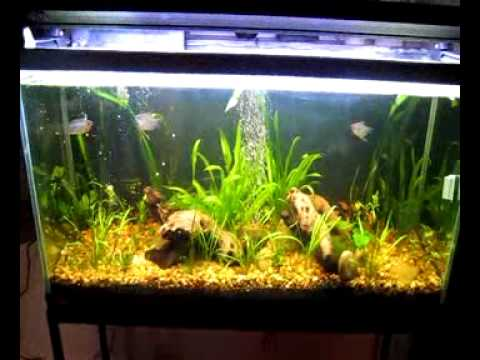 Aquarium Lighting in a Planted Tank