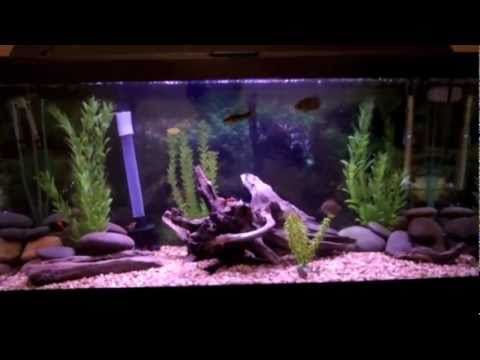 Feeding My 30 Gallon Tropical Freshwater Fish Tank
