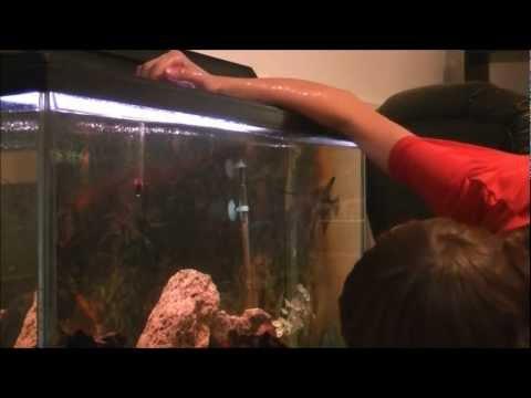 Fish Care: Ghost Shrimp